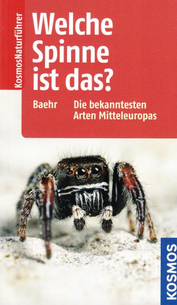 Welche Spinne ist das? Die bekanntesten Arten Mitteleuropas