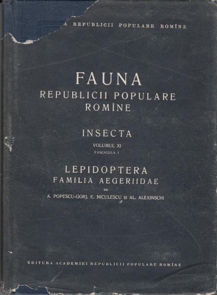 Familia Aegeridae. Lepidoptera. Insecta