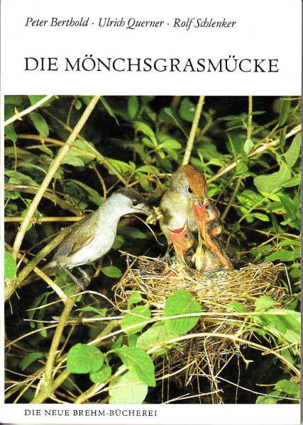Die Mönchgrasmücke. Sylvia atricapilla